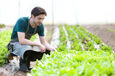 Young attractive farmer verify progress of culture — Foto Stock