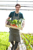 Young happy farmer with a crate full of vegetable — Stock Photo