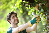 Young attractive gardener cutting leaves — Stock Photo