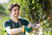 Young attractive gardener cutting leaves — Stockfoto