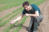 Young attractive farmer verify progress of culture — ストック写真