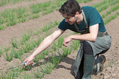 Young attractive farmer verify progress of culture — Stockfoto