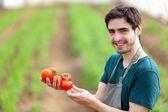 Mladý atraktivní zemědělci sklizeň rajčat — Stock fotografie