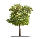 Beautifull gröna träd på vit bakgrund i high definition — Stockfoto