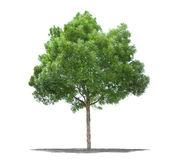 Beautifull verde árvore sobre um fundo branco em alta definição — Foto Stock