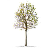 Krásný zelený strom na bílém pozadí ve vysokém rozlišení — Stock fotografie