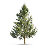 Piękne zielone drzewo na białym tle w wysokiej rozdzielczości — Zdjęcie stockowe