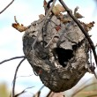 Stock Photo: Hornets Nests