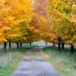 Stock Photo: Autumn Footpath