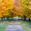 Autumn Footpath - Lizenzfreies Foto