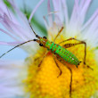 Katydid Nymph — Stock Photo