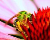 Green Metallic Bee — Stock Photo