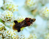Ambush Bug — Foto de Stock