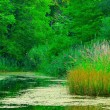 Swamp Landscape — Stock Photo