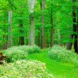 Woodland Footpath — Foto de Stock