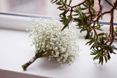 Bunch of Gypsophila — Stock Photo