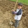 Foto Stock: Little arab boy with hoe