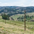 Telegraph poles — Stock Photo