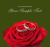 Obrączki ślubne i na czerwonych róż — Zdjęcie stockowe