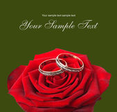 Wedding rings and on a red roses — Foto de Stock