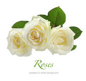 Three white roses isolated on white — Stock Photo