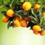 Orange branch — Stock Photo