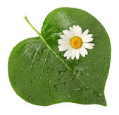 Green leaf with flower — Stock Photo