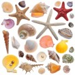 Seashell collection isolated on the white — Stock Photo