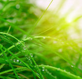 Soft green grass background — Photo