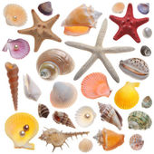 Seashell collection isolated on the white — Foto de Stock