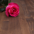 Rose on wood background — Stock Photo