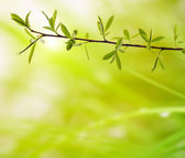 Branch with green leaves on a blurred background — Stock Photo