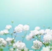 White flower on blue background. Soft focus. — Stock Photo