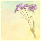 Blue cornflower. Soft focus. Made with lens-baby and macro-lens. — Stock Photo