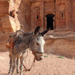 Постер, плакат: Lone donkey near the ruins