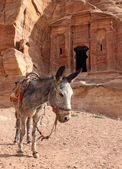 Lone donkey near the ruins — Stock Photo