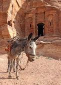 Lone donkey near the ruins — Stock Photo