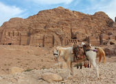 Lone horse near the ruins in Petra — Stock Photo