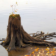 Old wooden stump in the water — Stock Photo #17858235