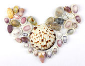 Seashells in the shape of heart — Stock Photo