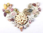 Seashells in the shape of heart — Stock Photo