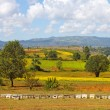 Row of beehives on agricultural fields, hills in the background — Stock Photo