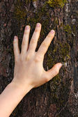 Human hand touches the tree bark — Stock Photo