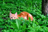 Cat hunting — Stockfoto