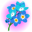 Forget-me-not — Stock Vector