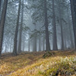 Fog in forrest — Stock Photo #18391207