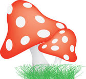 Red and white spotted toadstools — Stock Photo