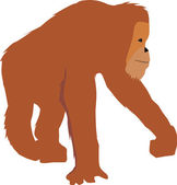 Illustration of an orangutan in a simple graphic flat style — Stock Photo