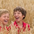 Children in a wheat field — Stock Photo