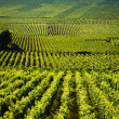 Vineyards in Gevrey chambertin burgundy France - ストック写真